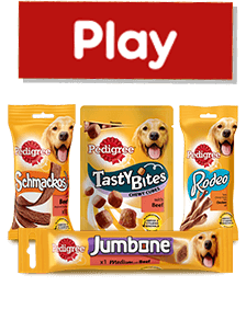 Pedigree® Treats Products